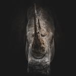 luri rhino