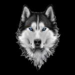 sahil wolf